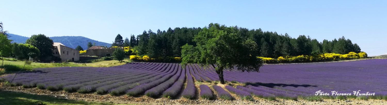 Visites guidées en Provence Verte